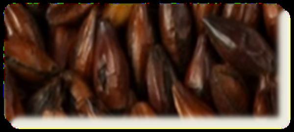 Billede af Chocolat Malt, ØKO - EBC 900