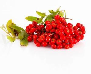 Billede af Rønnebær