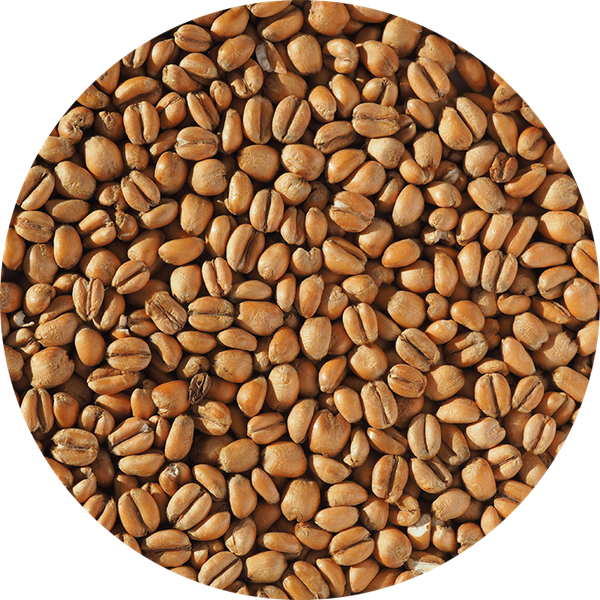 Torrified Wheat Malt - EBC 3-5